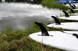 sup fins on shore