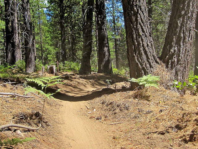 Tiddlywinks Mountain Bike Trail