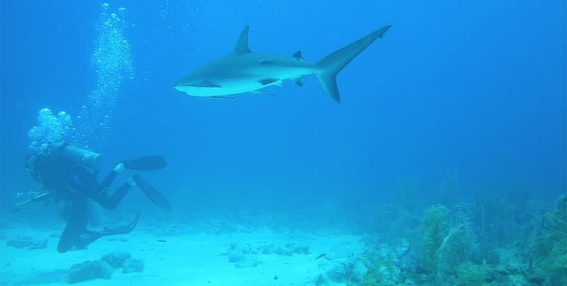snorkeling in bahamas