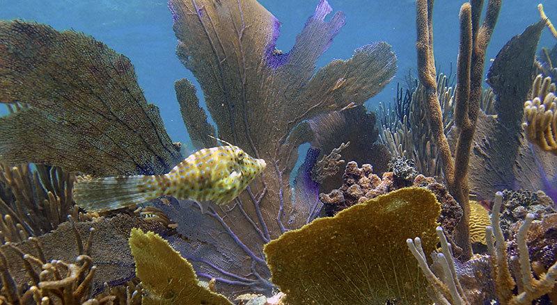 snorkel puerto rico