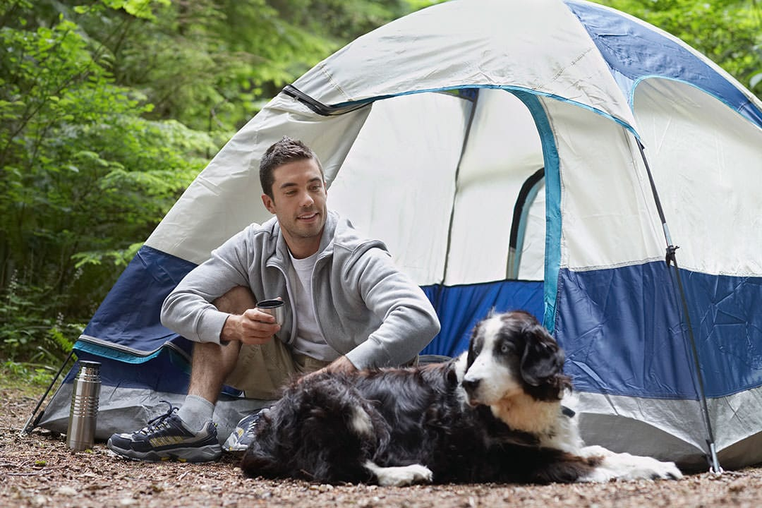 man camping with a dog