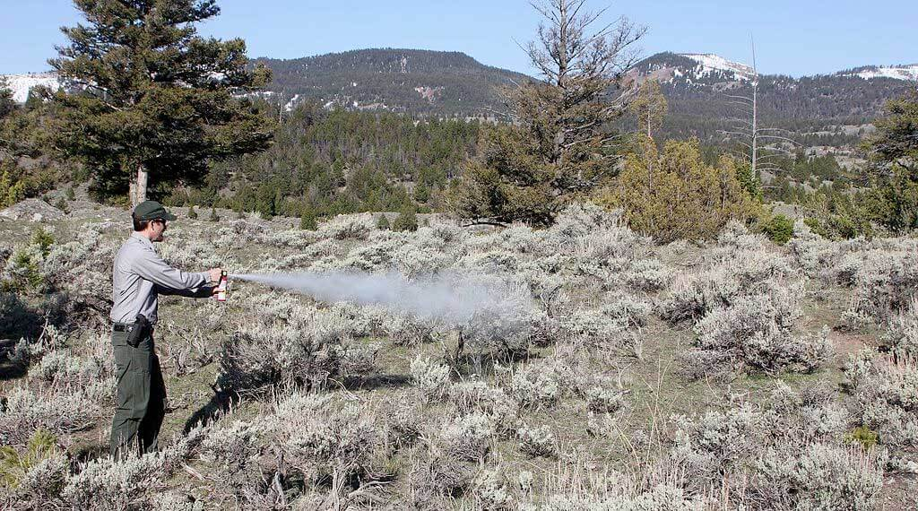bear spray usage