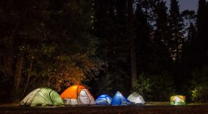 tents in the forest at night
