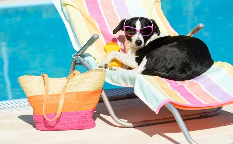 dog on pool chair with sunglasses