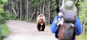 bear in the wild approaching hiker