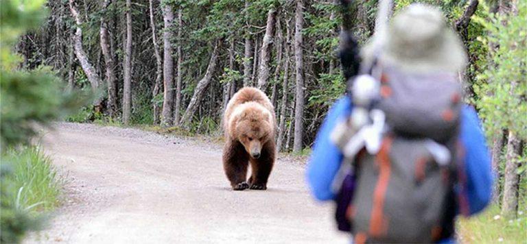 bear in the wild approaching hiker