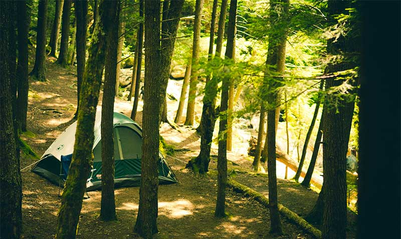 camping under trees