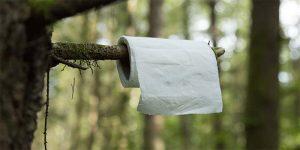 toilet paper woods