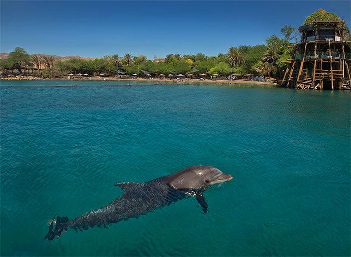 Eilat Dolphins