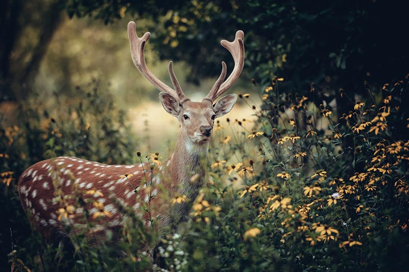 deer standing in woods